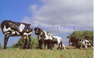 The Concrete Cows