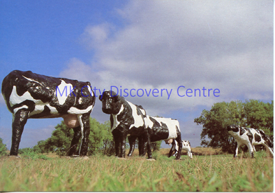 The Concrete Cows | © Milton Keynes Development Corporation, Crown Copyright. Licensed under the Open Government Licence v3.0
